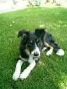 Amy at about 6 months (Summer 2003)